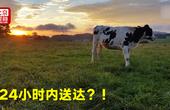 想要澳洲牛奶龙虾红酒?国际物流让更多鲜货24小时内直达中国!