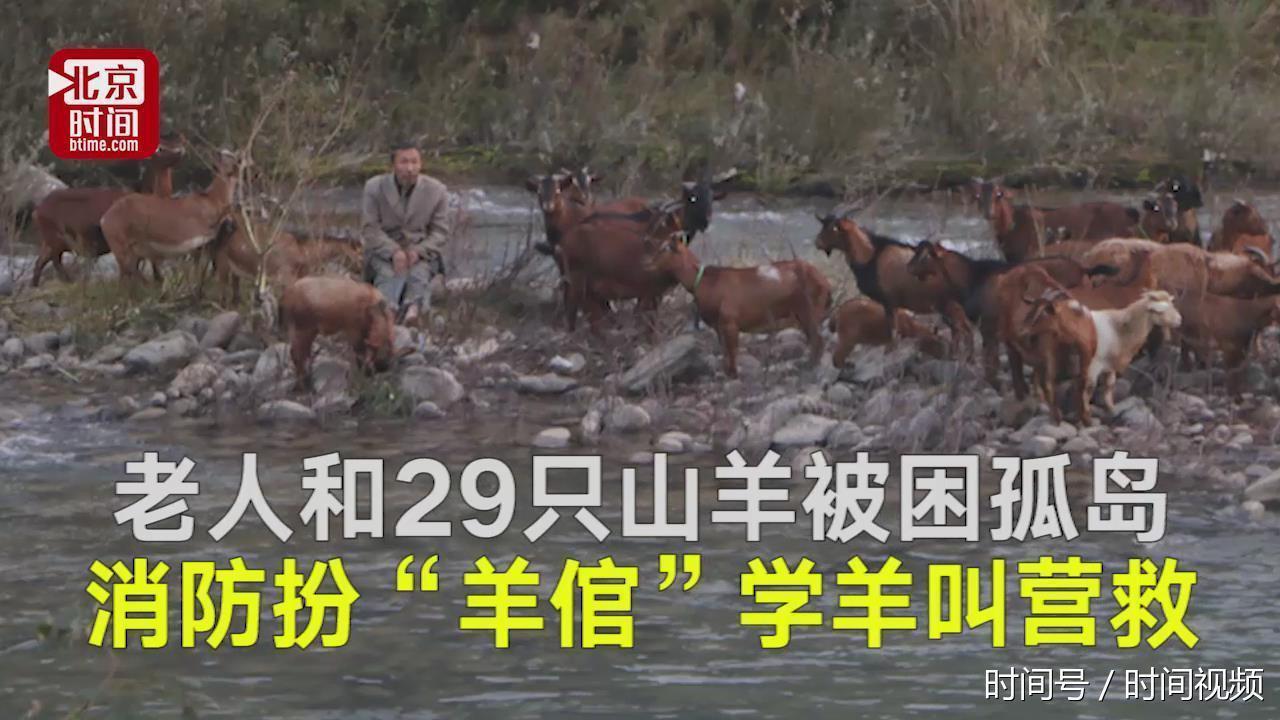 """老人和29只山羊被困孤岛 消防扮""""羊倌""""学羊叫营救"""