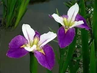 花团锦簇,争妍斗艳,赏花请到文登来!