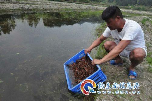 """返乡农民工:小龙虾要""""火""""到大城市"""