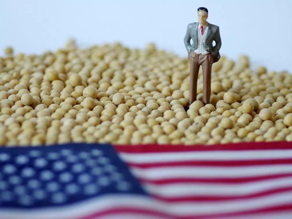 中国几乎停止进口美国大豆 美国农民亏太多不敢种了