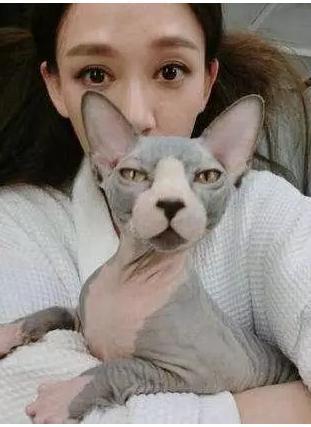 霍思燕家的猫生了5只值15万的小崽,王思聪家连