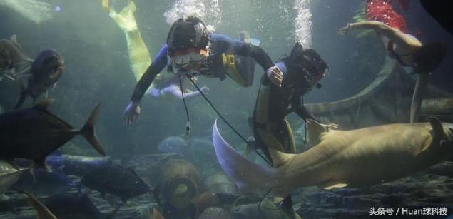 全球首个人造鱼鳃问世,戴上就能像鱼一样,在