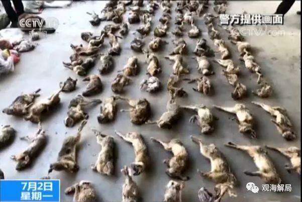 触目惊心 这些官员从吃野味、贩野味到捕猎致人