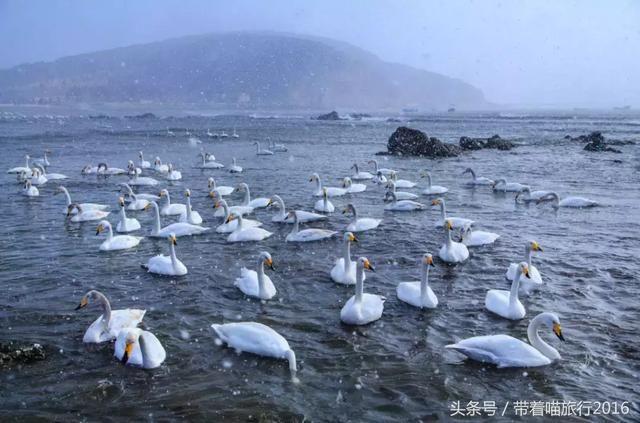 中国最干净的滨海小城,冬天景色堪比童话,这个时候去刚刚好!