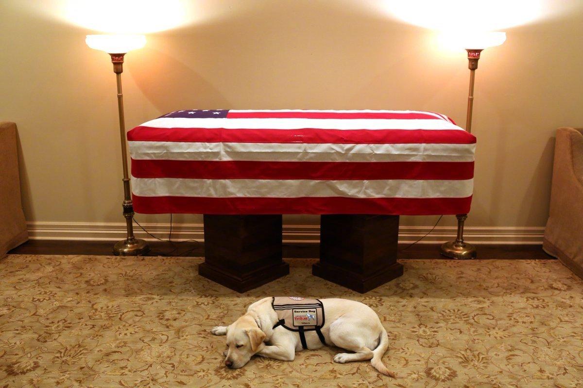老布什的服务犬有了新任务:将帮助受伤士兵