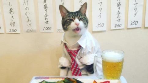 猫咪热衷Cos各种角色 美食当前超淡定