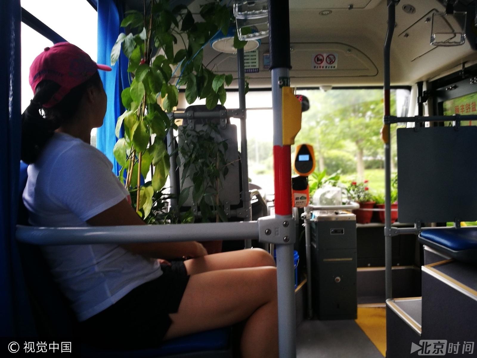 别样绿色出行!女司机公交车内种丝瓜辣椒 - 武汉老徐 - 武汉老徐的博客