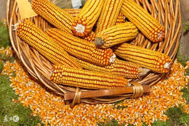 2018年春节前玉米价格是涨还是跌?进来看分析